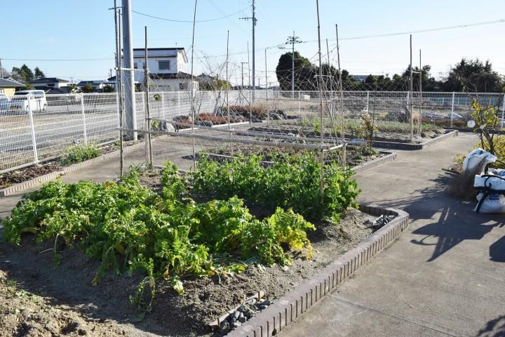 コミュニティ庭園